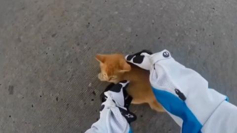 This biker saved a kitten from certain death