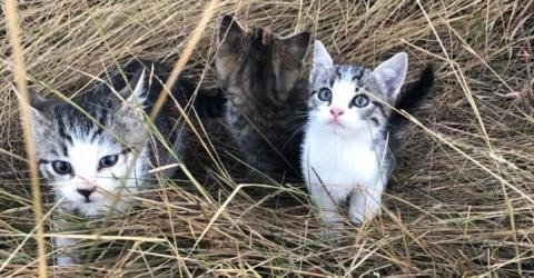 She Found A Litter Of Abandoned Kittens, What Happened Next Is Unbelievable