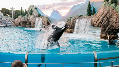 Distressed captive orca seen bashing its own head at marine park