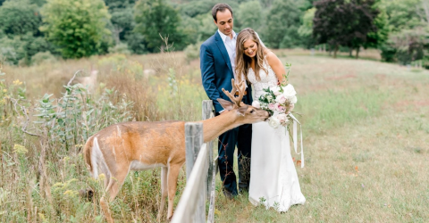 A wild deer crashed their wedding and made for the most beautiful photos