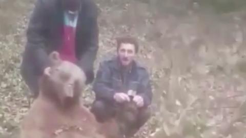 Animal Cruelty: Horrendous Videos Show Hunters Torturing Brown Bears in Turkey